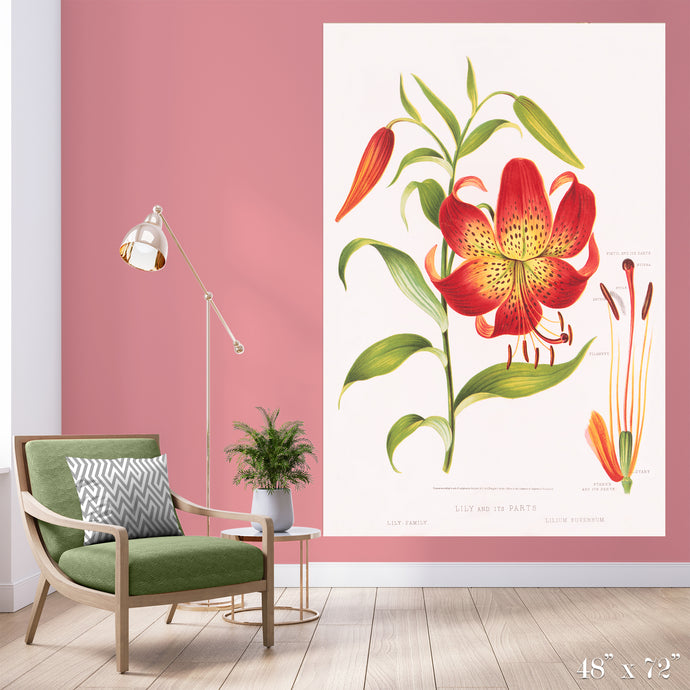 Tiger Lily Colossal Art Print