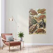 Load image into Gallery viewer, Tortoise Study Colossal Art Print