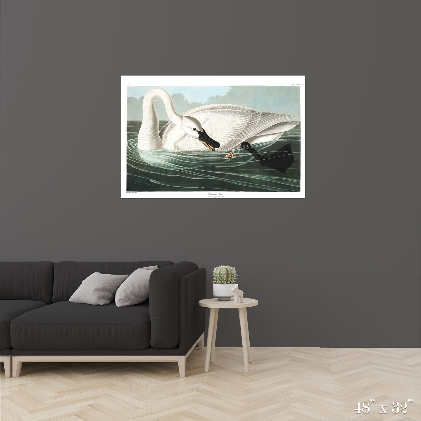 Trumpeter Swan Colossal Art Print