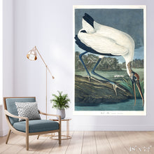 Load image into Gallery viewer, Wood Ibis Colossal Art Print