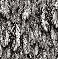 Sample Feather Wallpaper Black and Silver  5151