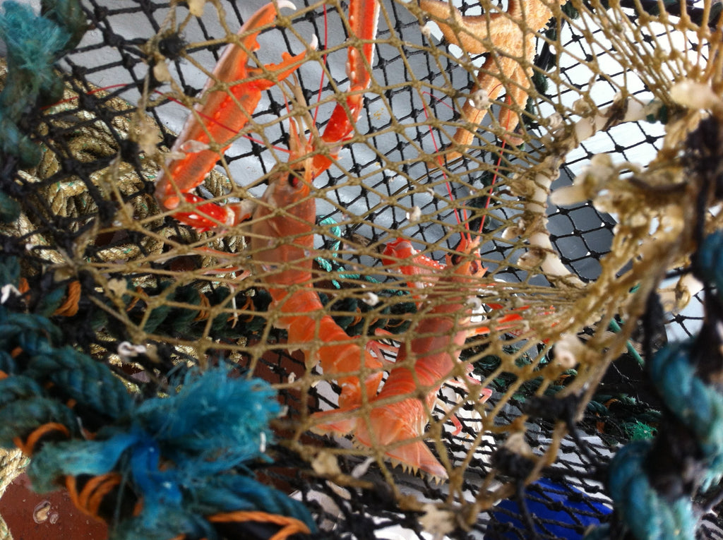Langoustines, or simply prawns as we call them in Harris.