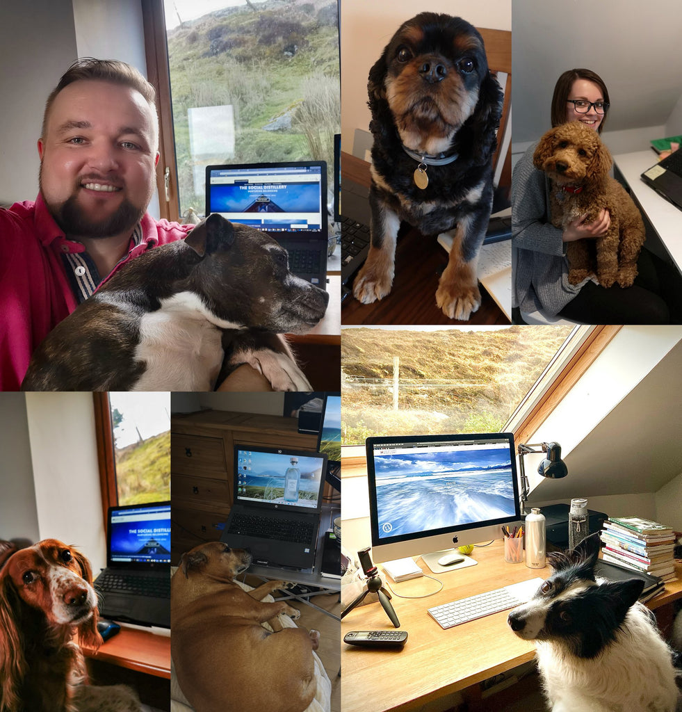 Home working certainly suited the four-legged members of our families.