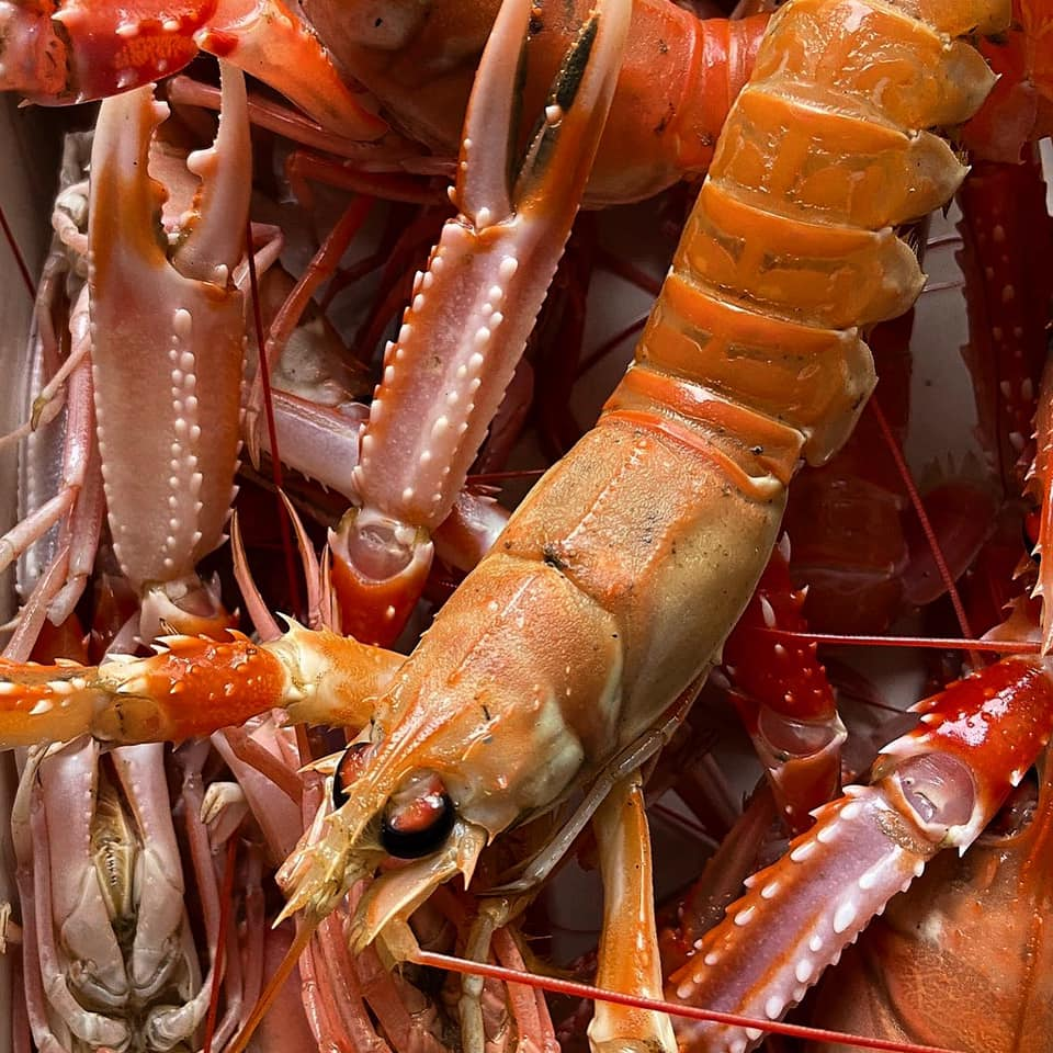 Langoustines, known more commonly here as prawns.