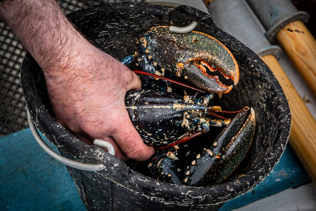 Fresh lobster from the Sound of Harris.