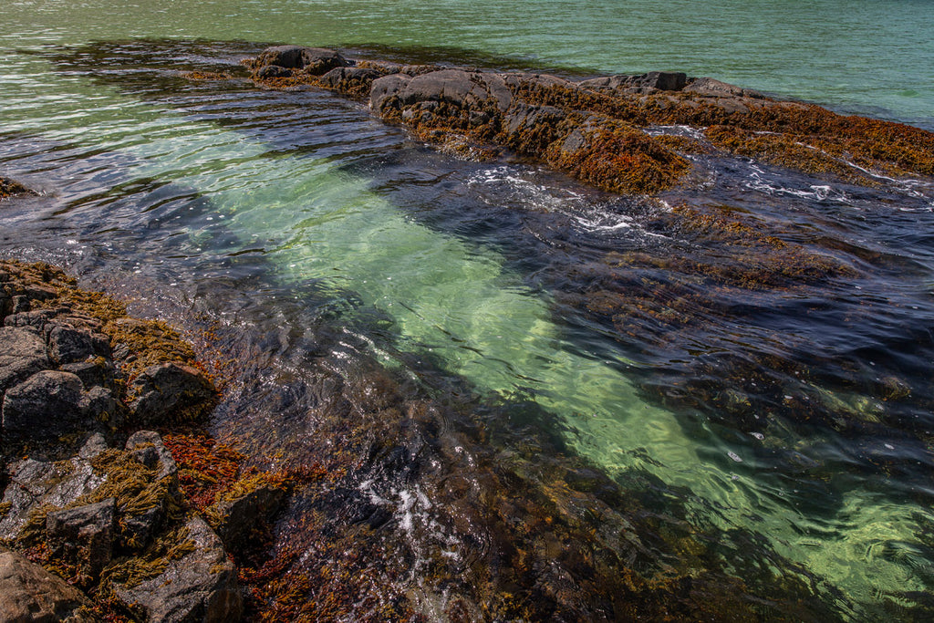 Cold, clear seas provide the perfect place for spring growth.
