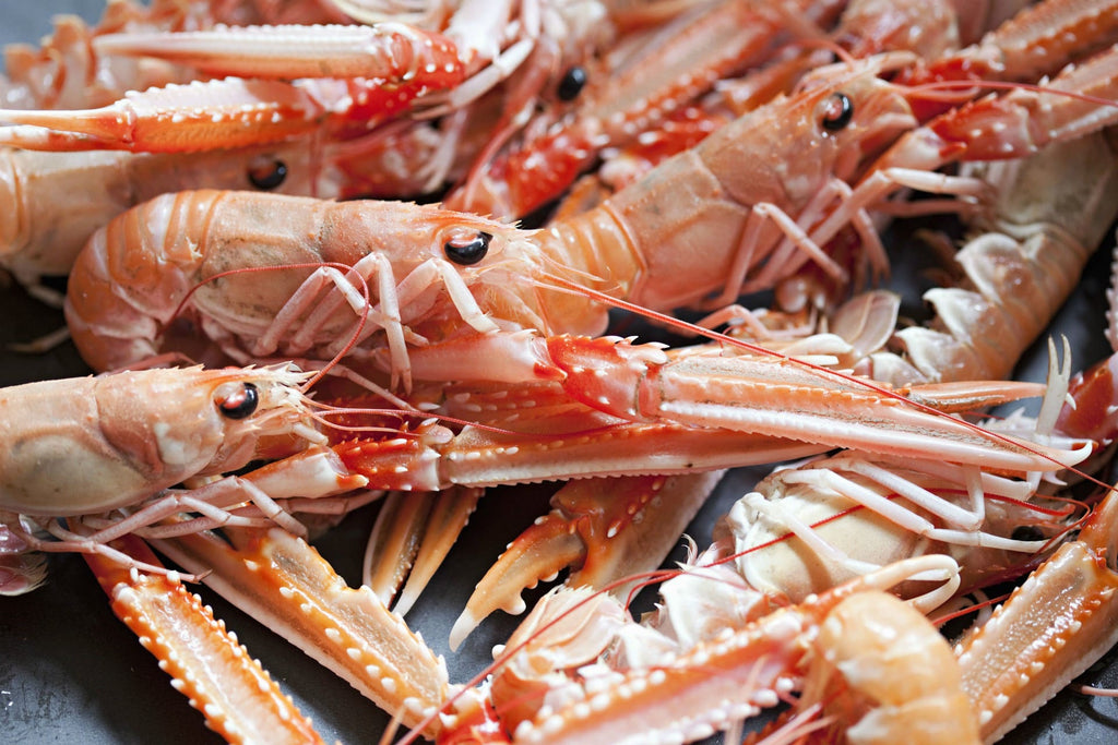 Lots of lovely fresh langoustines, ready for cooking.