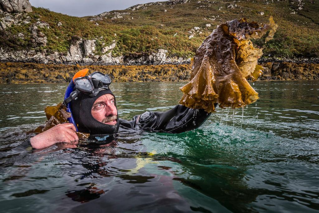 Lewis getting hands on with the glorious Sugar kelp.