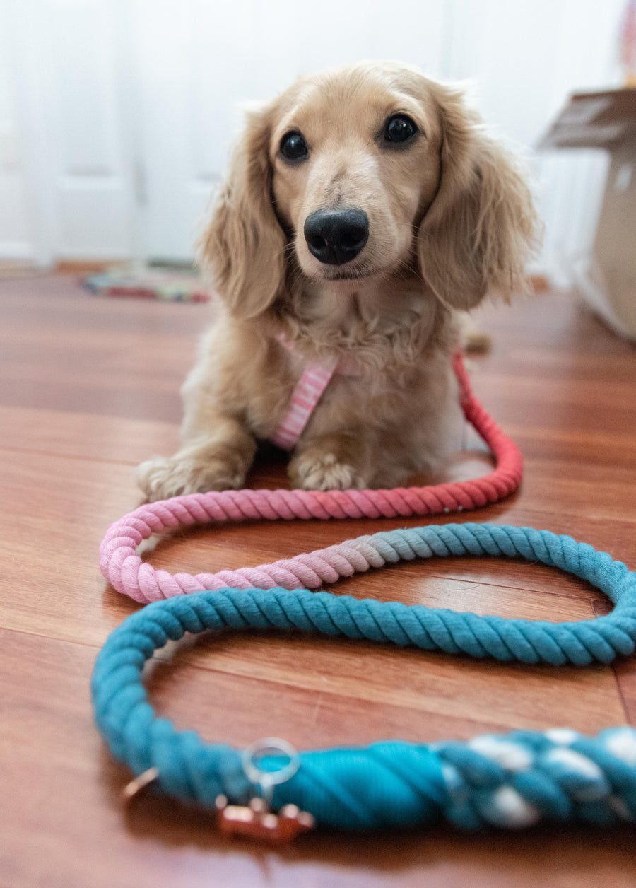 Rope Leash - Jack & Jill
