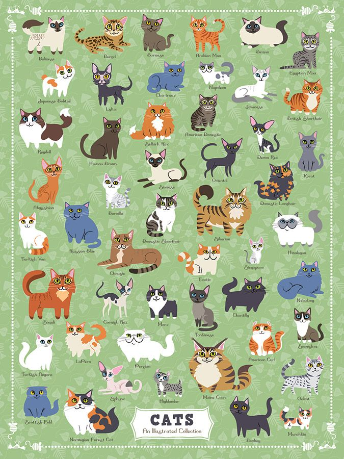 Cats 500 Piece Jigsaw Puzzle