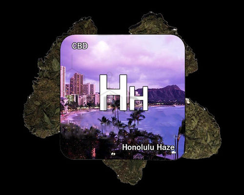 Honolulu Haze