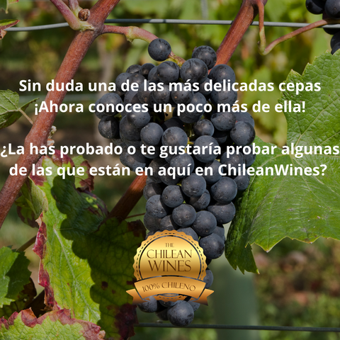 chileanwines o chilean wines