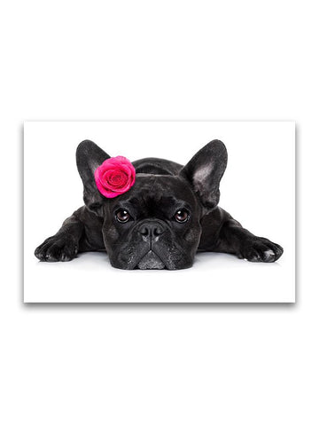 Pretty French Bulldog With Rose Poster -Image by Shutterstock