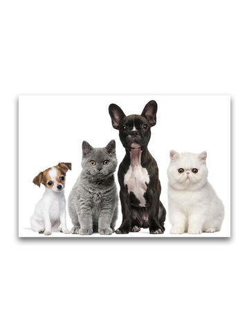 Group Of Adorable Baby Animals Poster -Image by Shutterstock