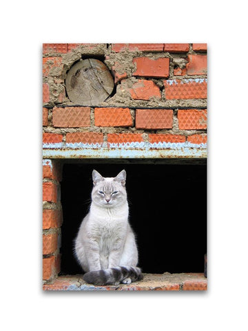 Adorable Urban Cat Resting Poster -Image by Shutterstock