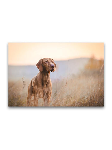 Beautiful Hound In Grass Field Poster -Image by Shutterstock