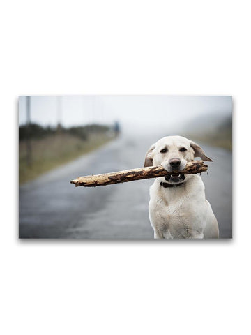 Cute Yellow Labrador With Stick  Poster -Image by Shutterstock