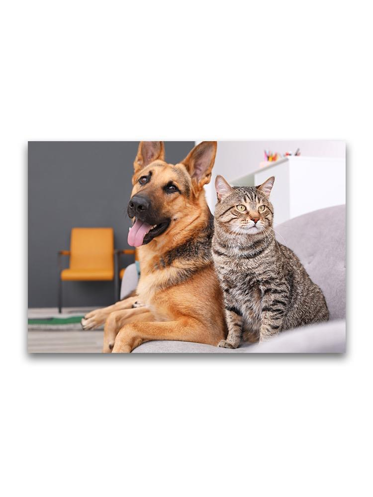 Resting Cat And Dog On Sofa Poster -Image by Shutterstock