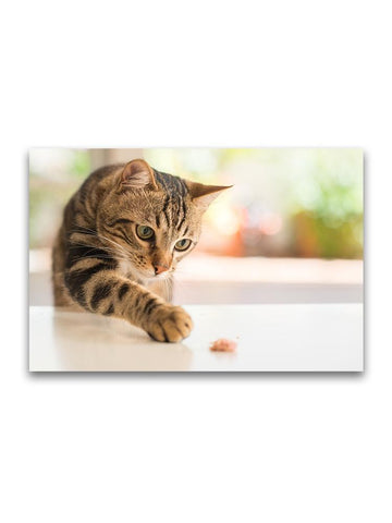 Curious Cat Reaching For Food Poster -Image by Shutterstock