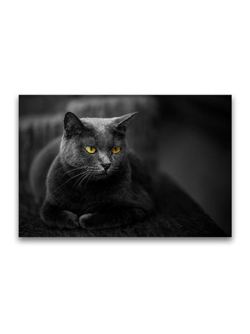 Amazing Yellow Eyed Grey Cat Poster -Image by Shutterstock