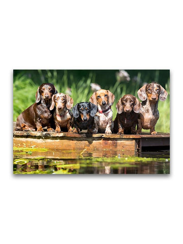 Amazing Group Of Dachshund Dogs Poster -Image by Shutterstock