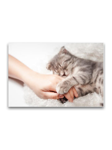 Sleepy Kitty Gripping On Hand Poster -Image by Shutterstock
