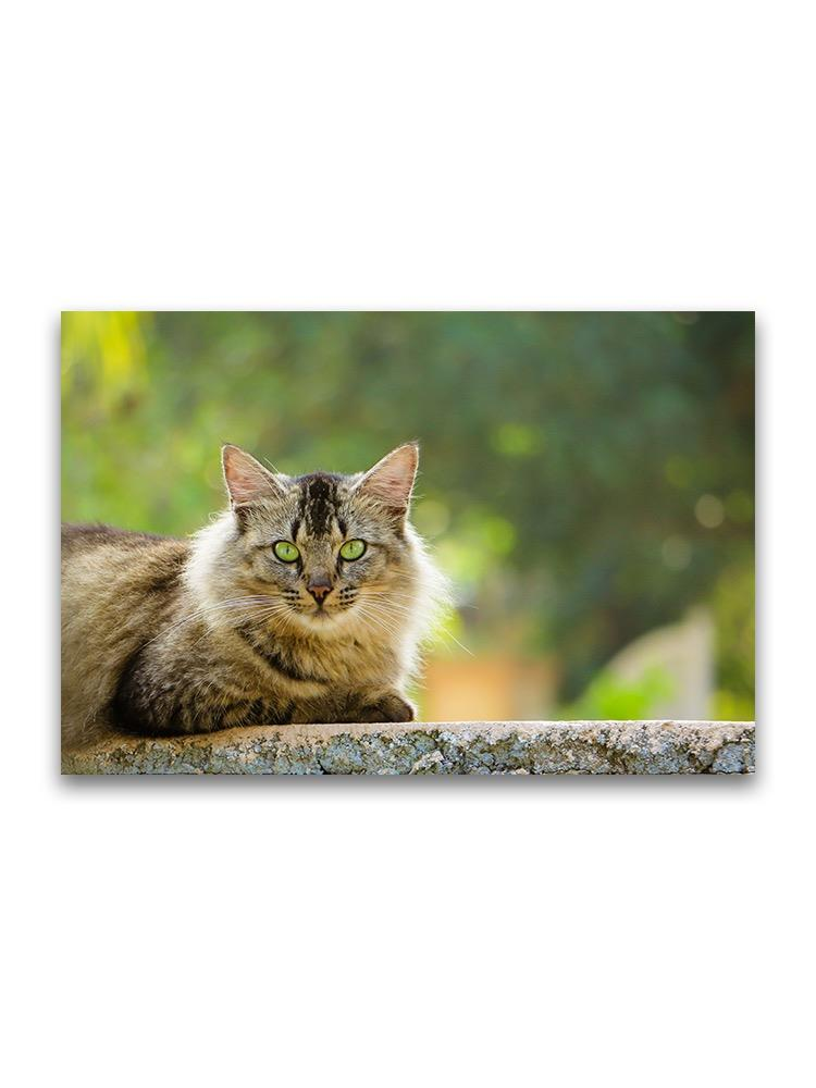 Brave Cat Sitting Over Wall Poster -Image by Shutterstock
