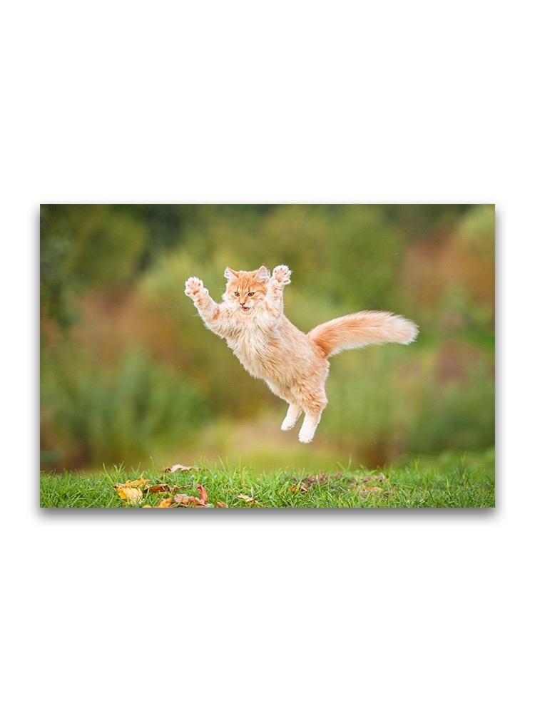Beautiful Ginger Flying Cat Poster -Image by Shutterstock