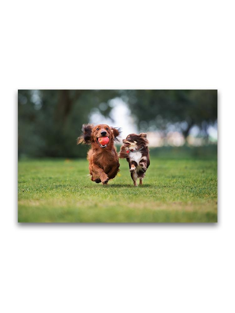 Small Dogs Playing Together Poster -Image by Shutterstock