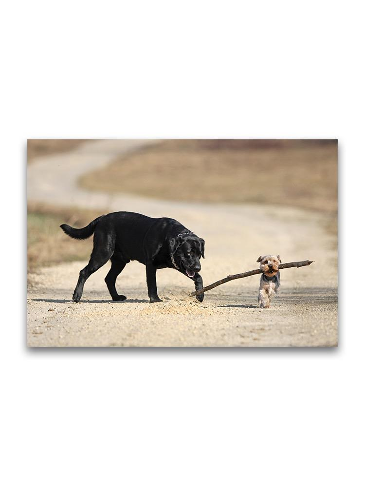Yorkshire And Labrador Playing Poster -Image by Shutterstock