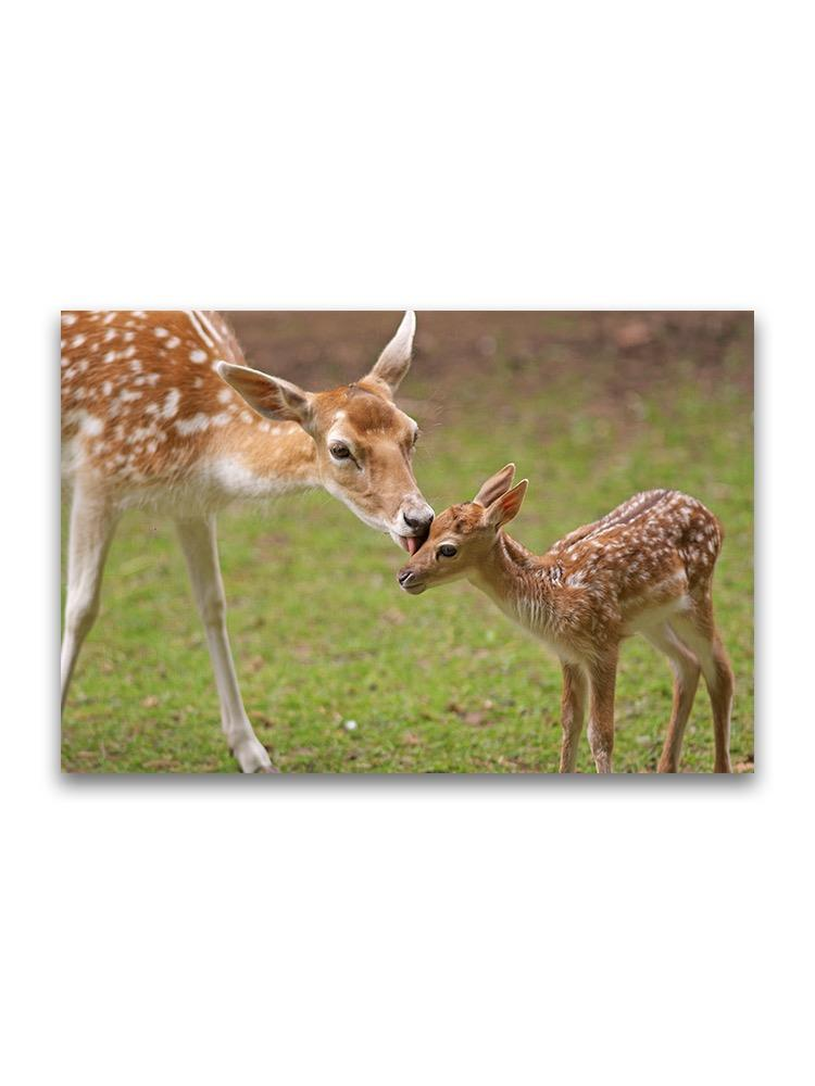 A Mother's Love Pair Of Fawns Poster -Image by Shutterstock
