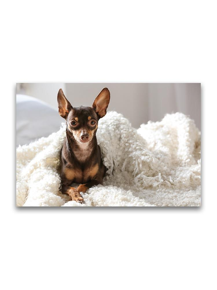 Toy Terrier Lying In Bed Poster -Image by Shutterstock