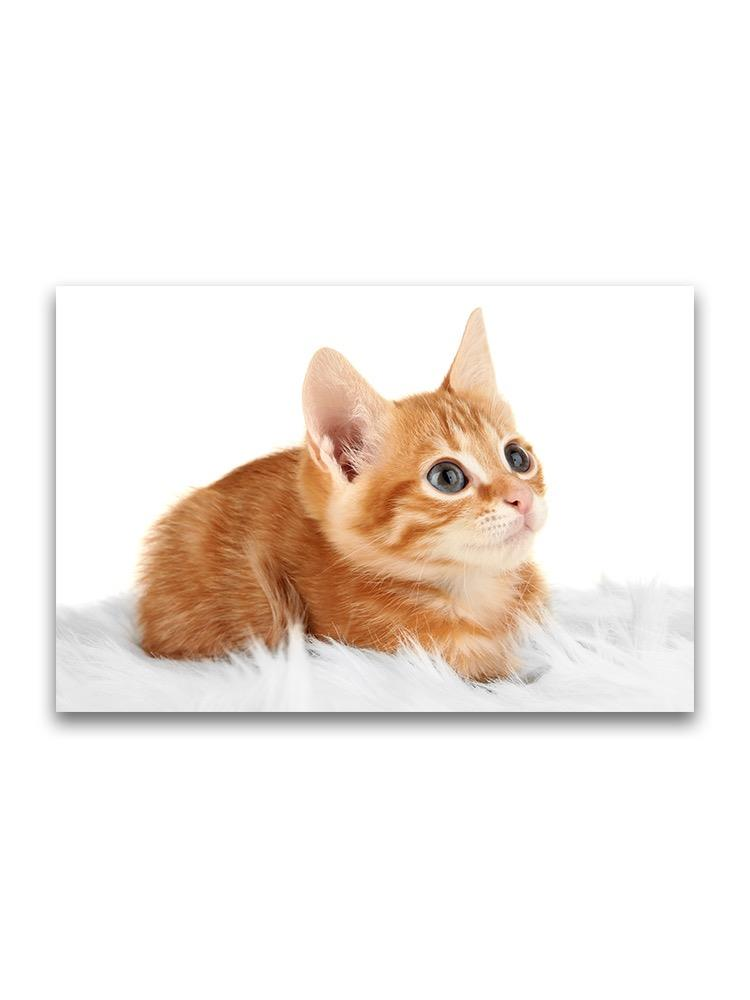 Adorable Tiny Ginger Kitty Poster -Image by Shutterstock