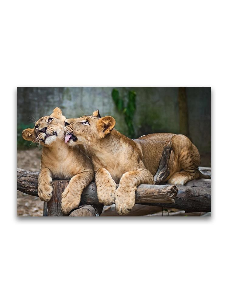 Amazing Young Lion Cubs Poster -Image by Shutterstock