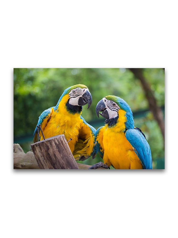 Blue And Gold Macaws  Poster -Image by Shutterstock