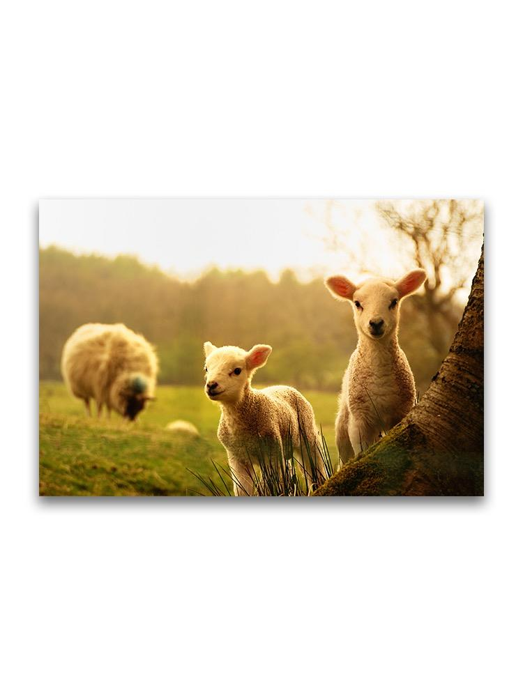 Baby Lambs In Field  Poster -Image by Shutterstock