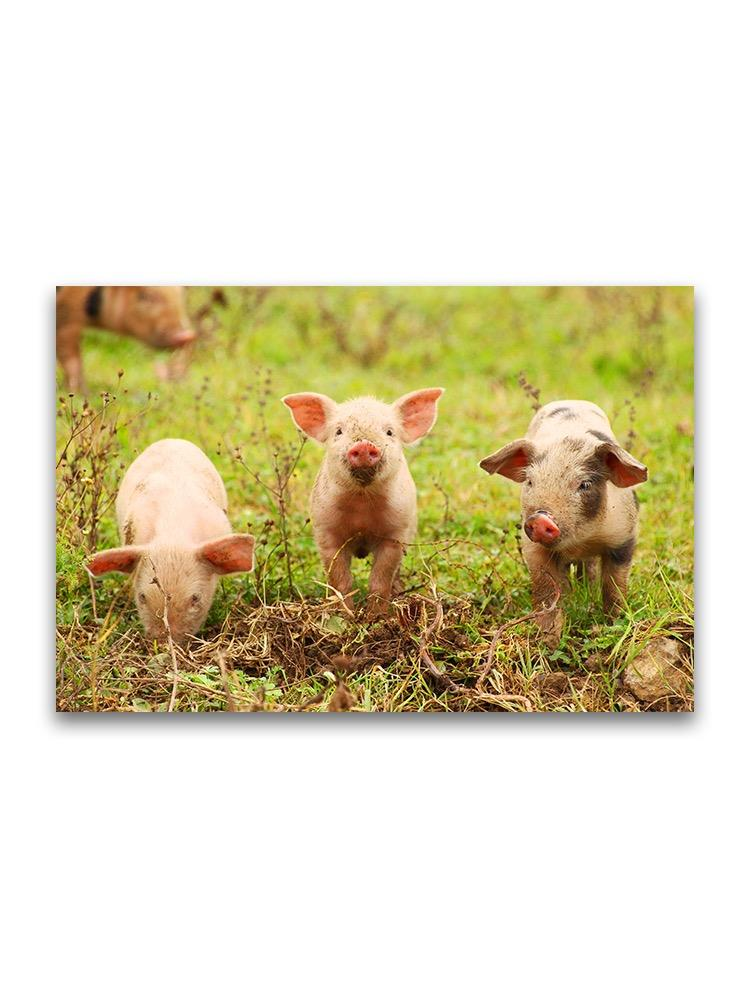 Three Piglets On Grass  Poster -Image by Shutterstock