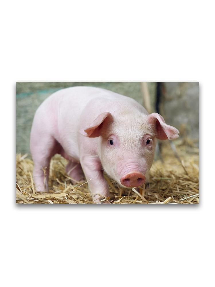 New Born Adorable Piglet Poster -Image by Shutterstock