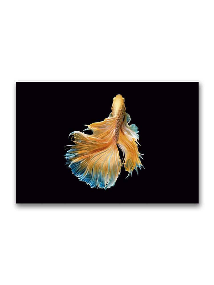 Movement Of Gold Betta Fish Poster -Image by Shutterstock
