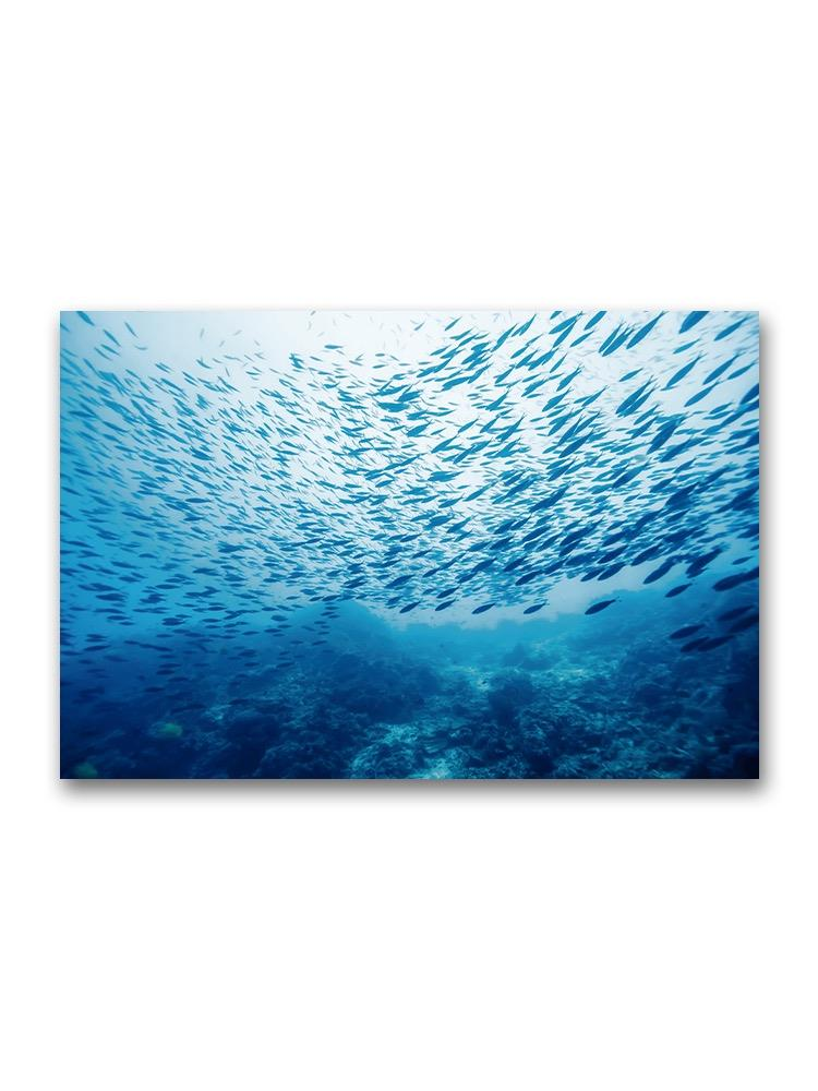 School Of Fish Underwater Poster -Image by Shutterstock