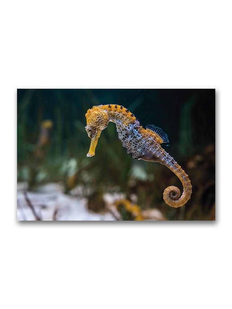 Incredible Seahorse Swimming Poster -Image by Shutterstock