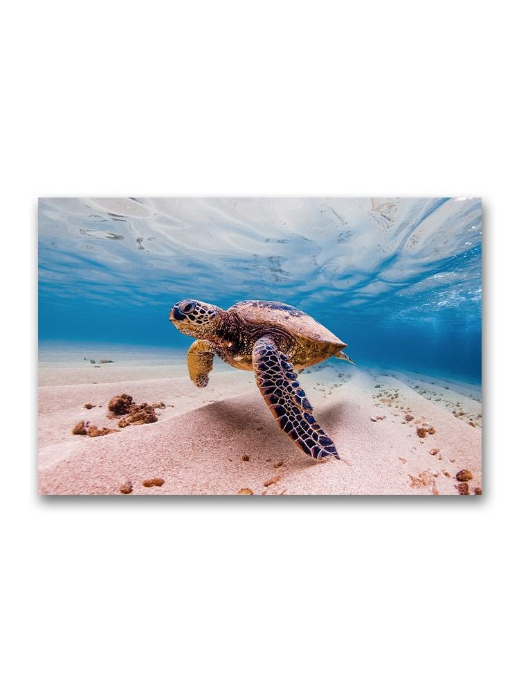 Amazing Sea Turtle On Sea Floor Poster -Image by Shutterstock