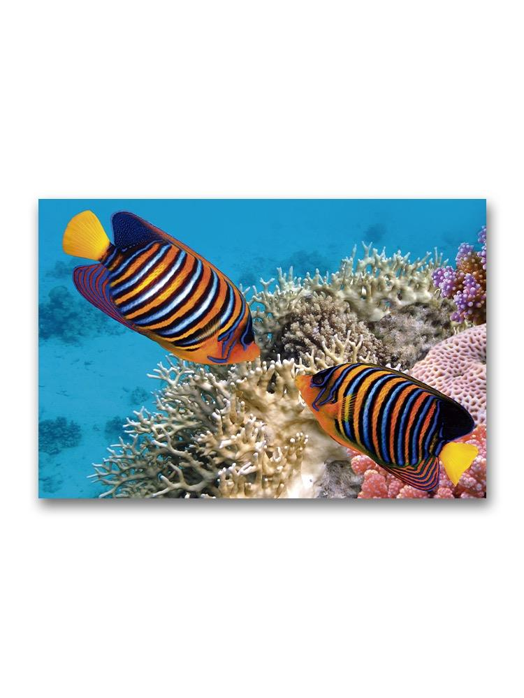 Cute Pair Of Angelfish Poster -Image by Shutterstock