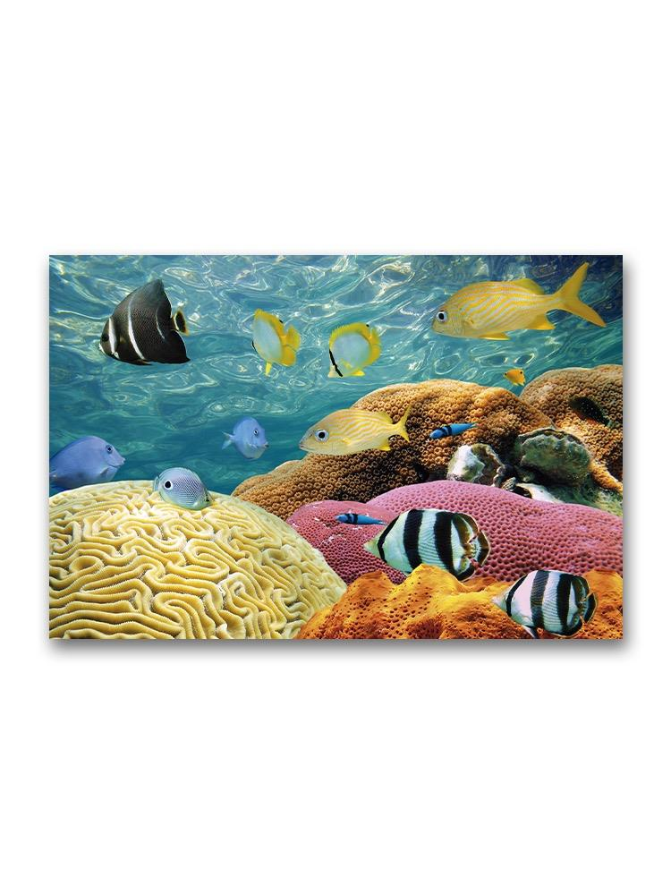 Amazing Coral In Reef With Fish Poster -Image by Shutterstock