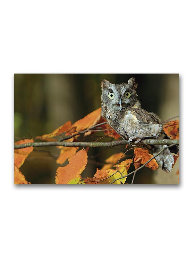 Owl On A Branch Poster -Image by Shutterstock