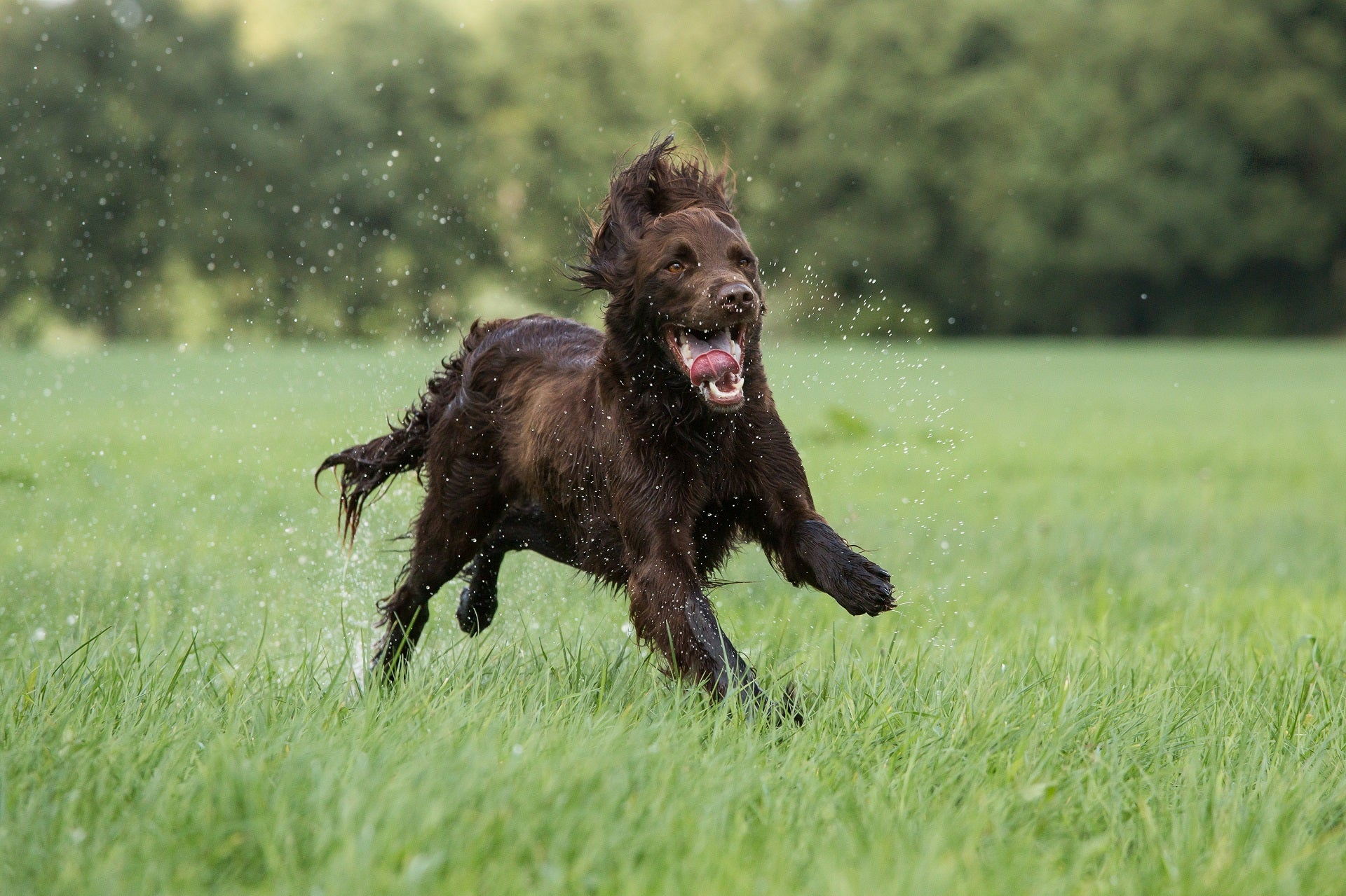Jumping, lifting, and dog joints - how to support your dog