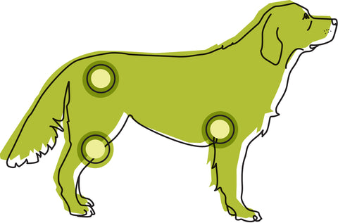 Illustration of dog with joints highlighted