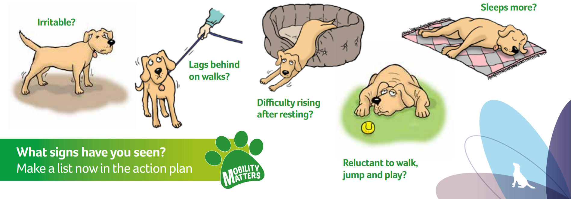 Showing the signs of chronic pain in dogs, which are irritable, reluctant to run, jump or play, sleeping more, difficulty rising after rest, slowing down on walks