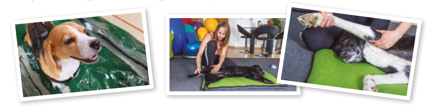Complementary therapy ideas for dogs with joint pain