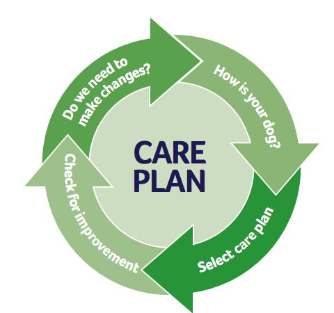 Care plan diagram: How is your dog?  Select care plan. Check for improvement Do we need to make changes?
